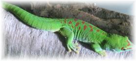 Seychelský ostrov Bird Island a zelený gekon