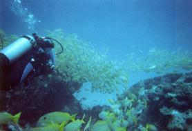 Potápění v Indickém oceánu