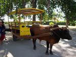Seychely a druh taxislužby