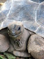 Seychelská želva